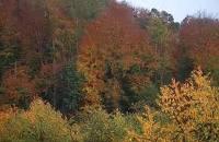 Bosques de Bosques   (Conferencia de Joaquín Araújo)